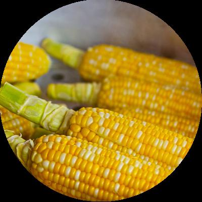 maiz_ingredientes